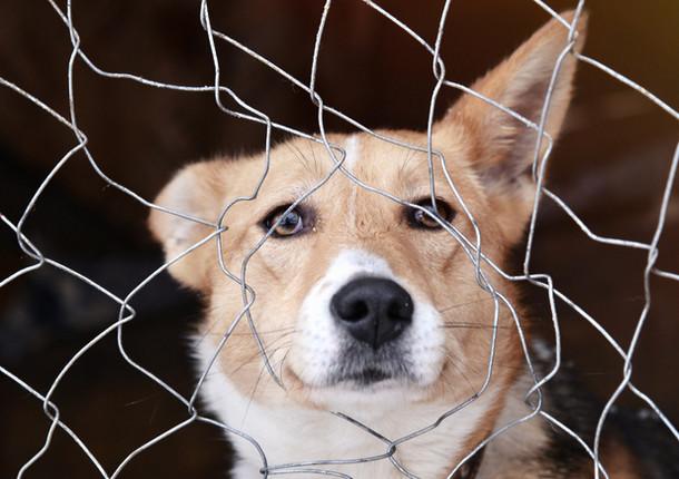 Постоянный мониторинг численности бездомных животных начали в Подмосковье
