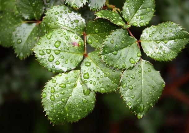 В Люберцах 13 мая прогнозируются кратковременные дожди и до +22 градусов